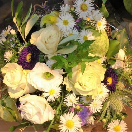 Blumen pflanzen  ARUM-Blumen Wattwil - Blumen / Pflanzen